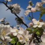 Stabilekonomi blom